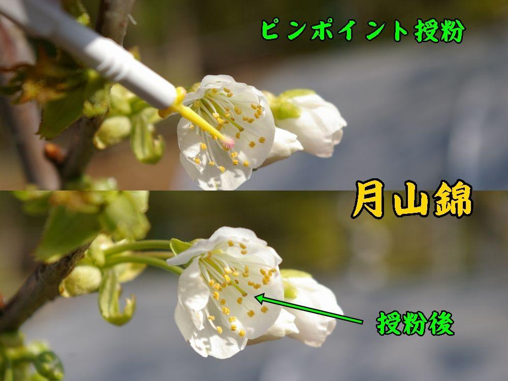 1gassan0412c1.jpg