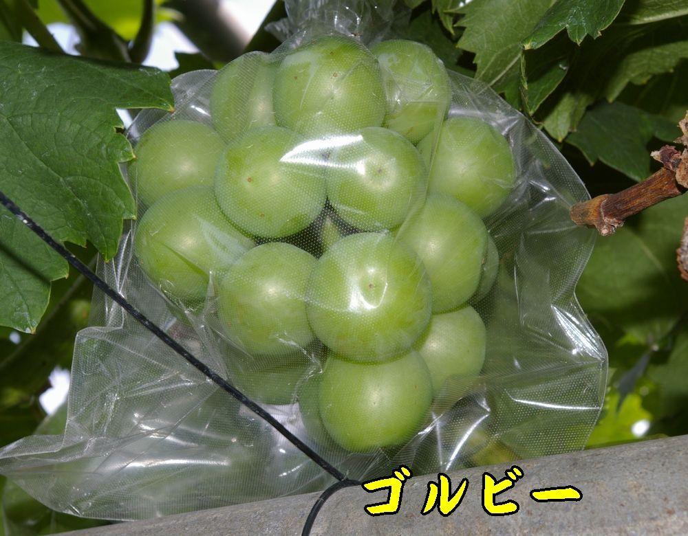 1golbee0712c2.jpg