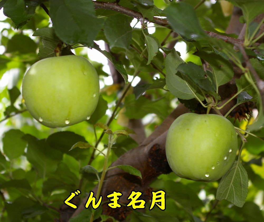 1gunmameigetu0901c1.jpg