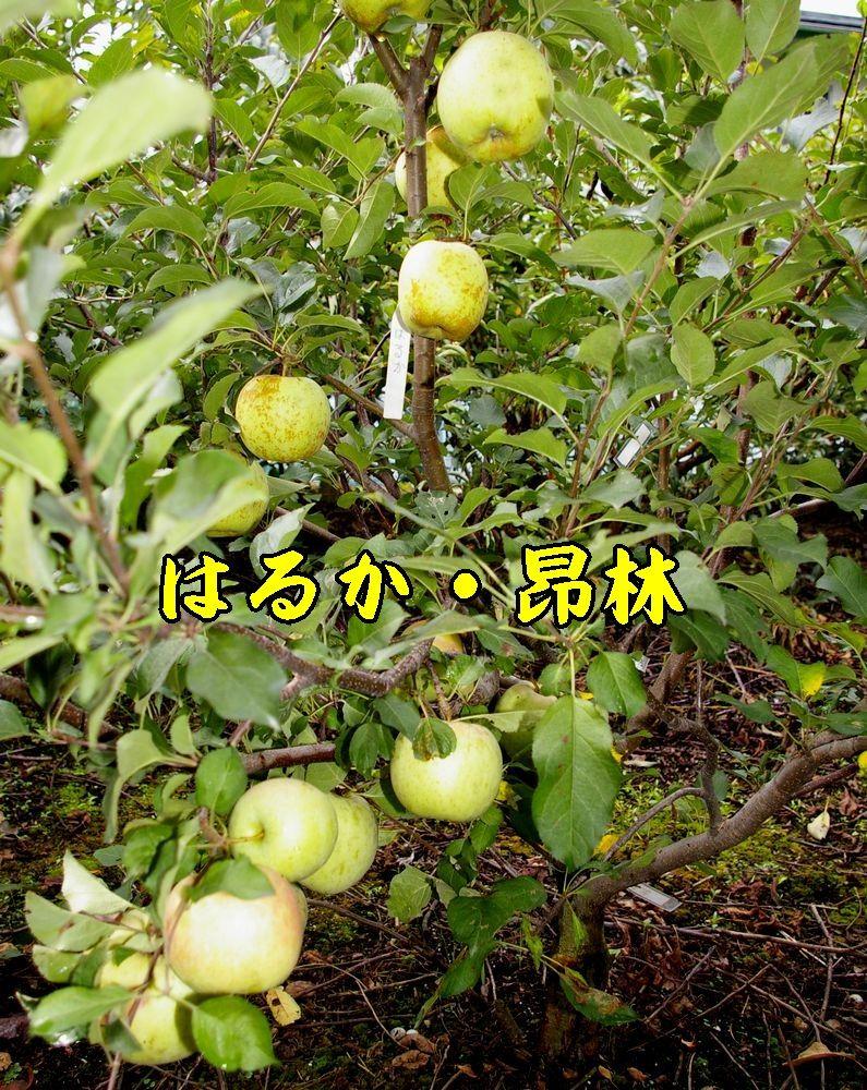 1har_kou0901c1.jpg