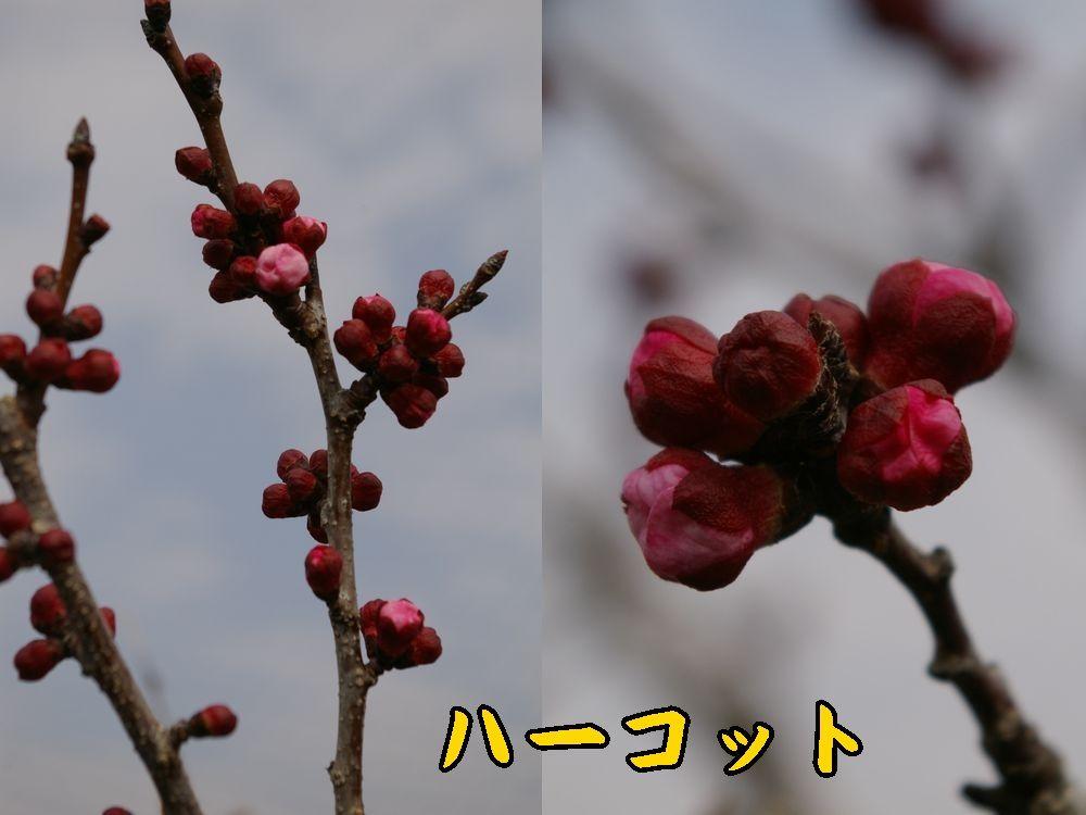 1harcot0319c1.jpg