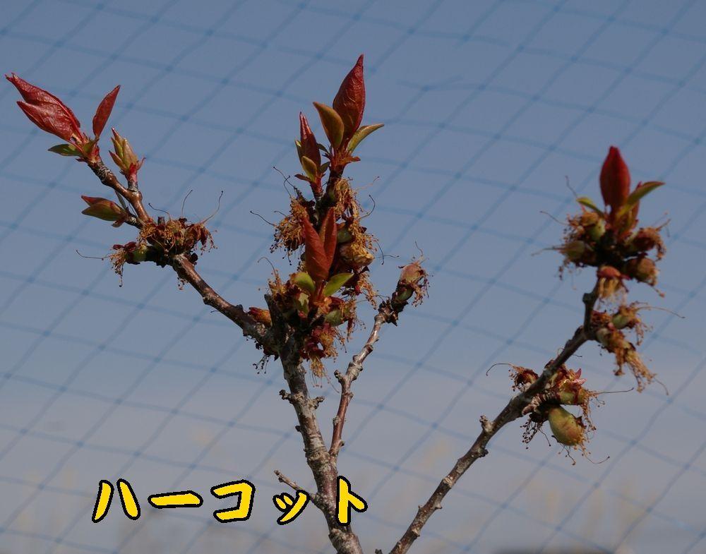 1harcot0412c3.jpg