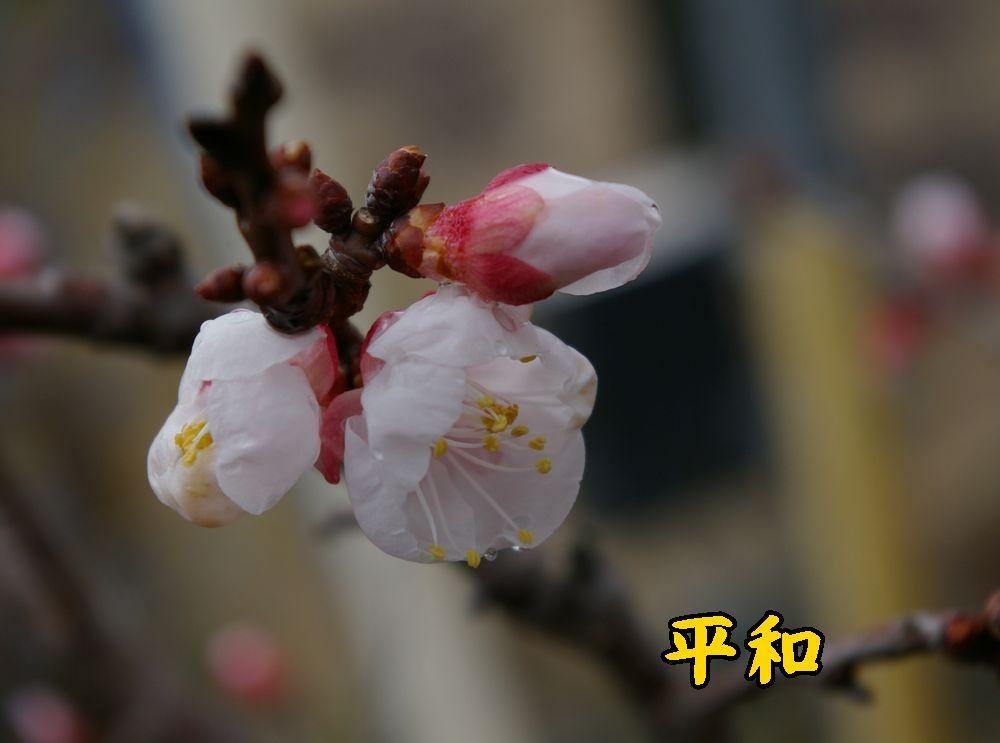 1heiwa0303c1.jpg