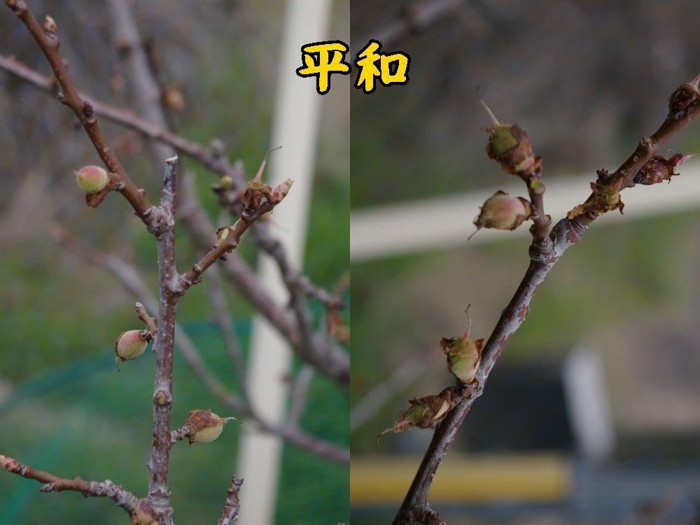 1heiwa0402c1.jpg