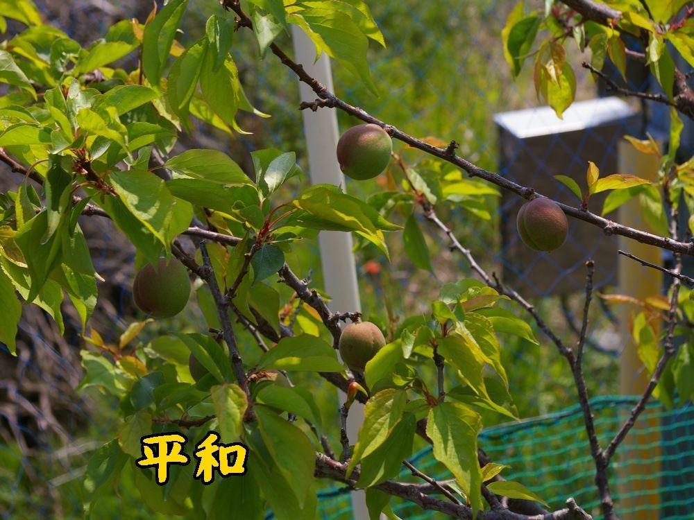1heiwa0426c1.jpg