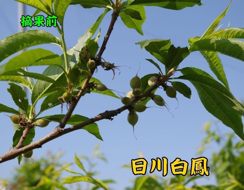 1hikawa0502c1.jpg