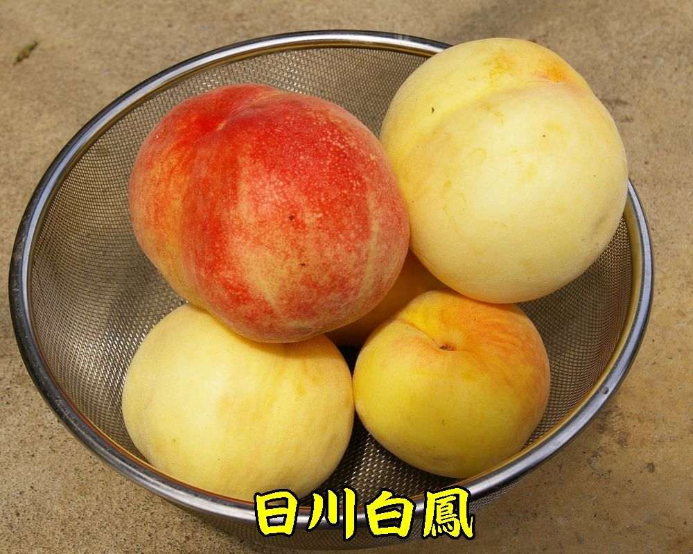 1hikawa0706c3.jpg