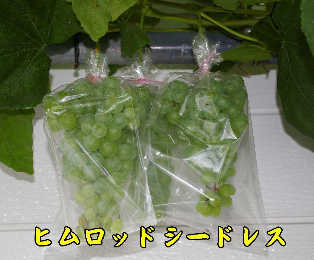 1himuro0803c1.jpg