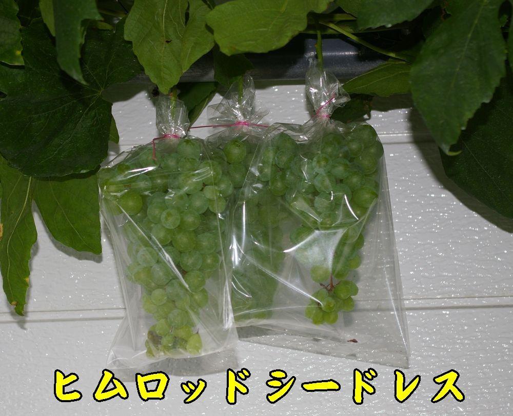 1himuro0806c1.jpg
