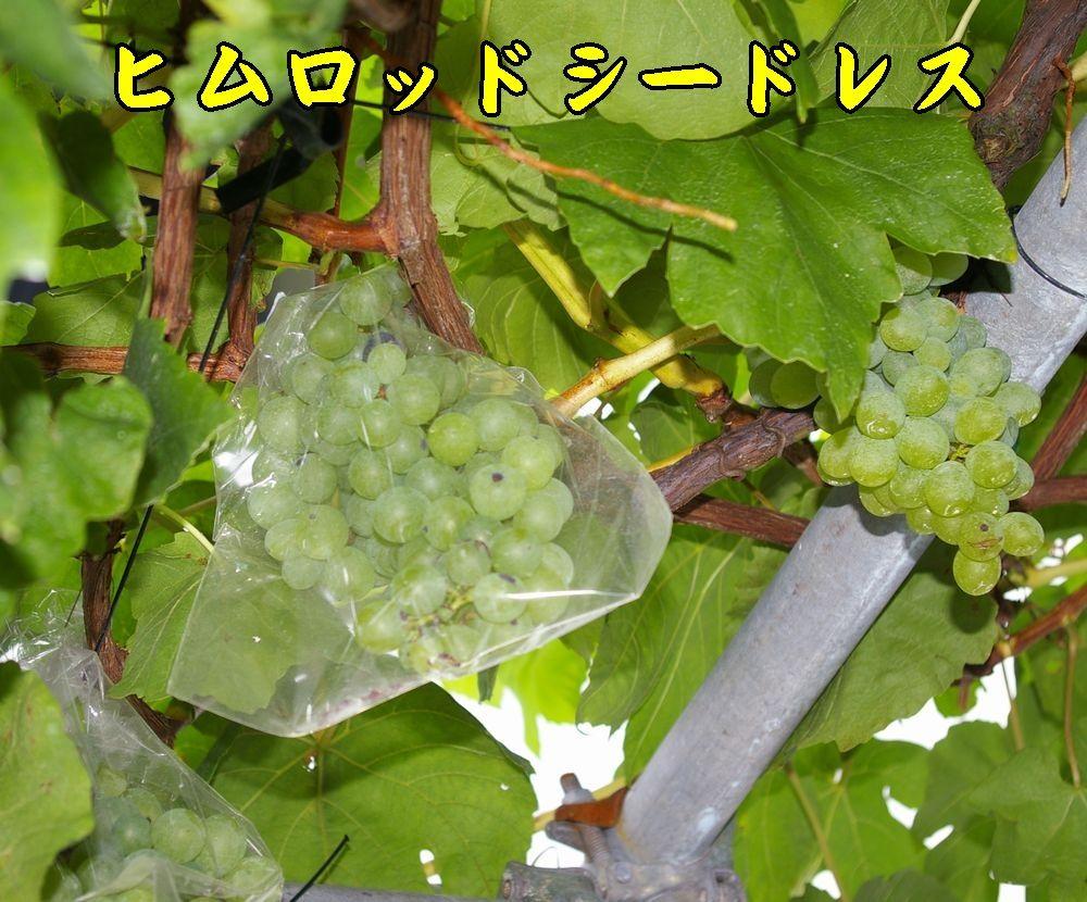 1himuro0806c2.jpg