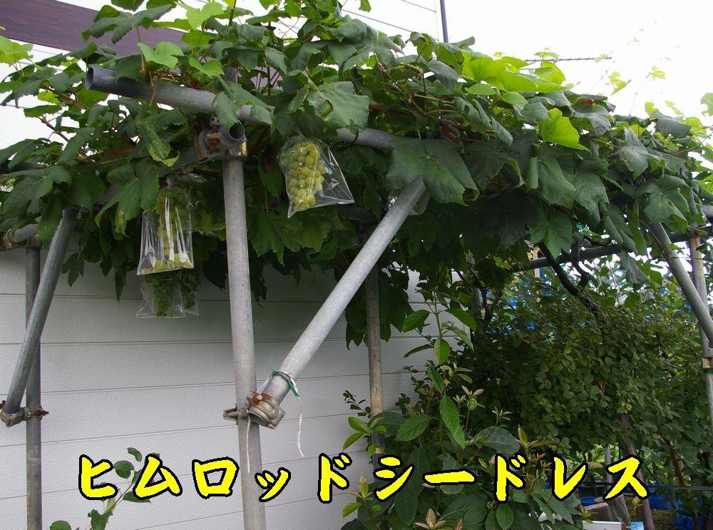 1himuro0806c4.jpg