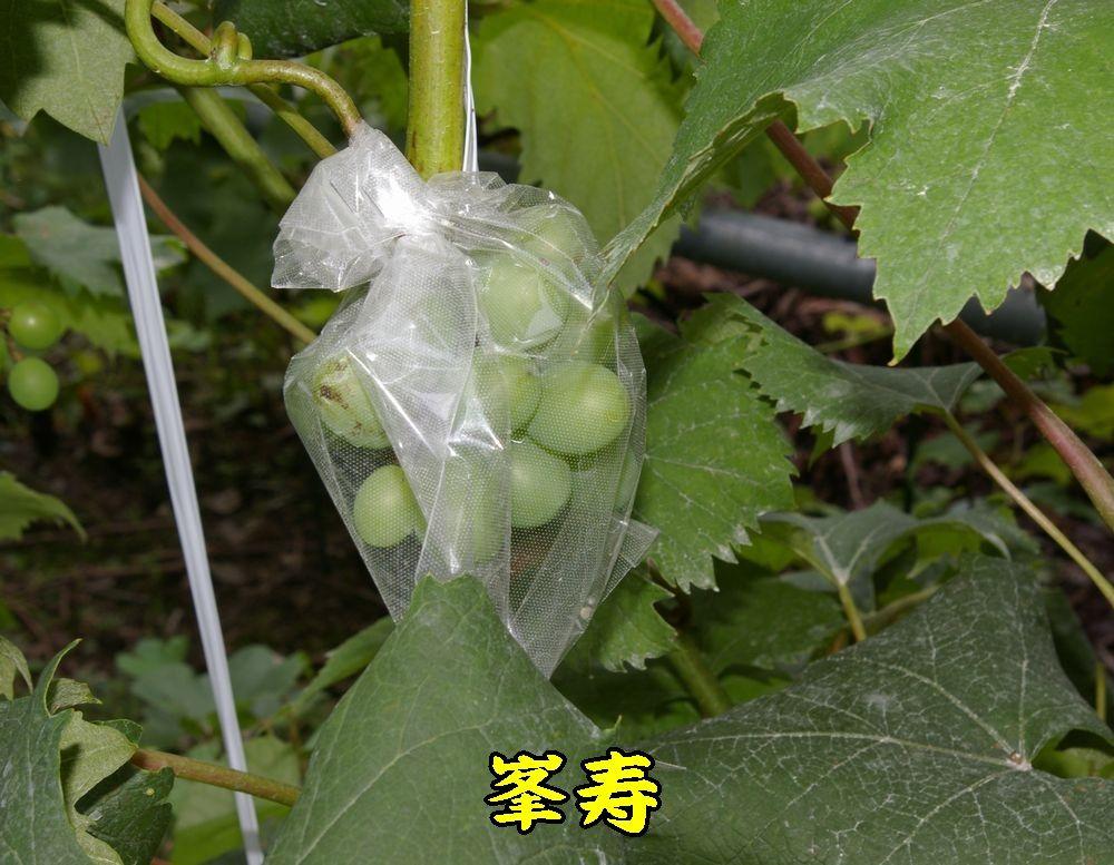 1houjyu0720c1.jpg