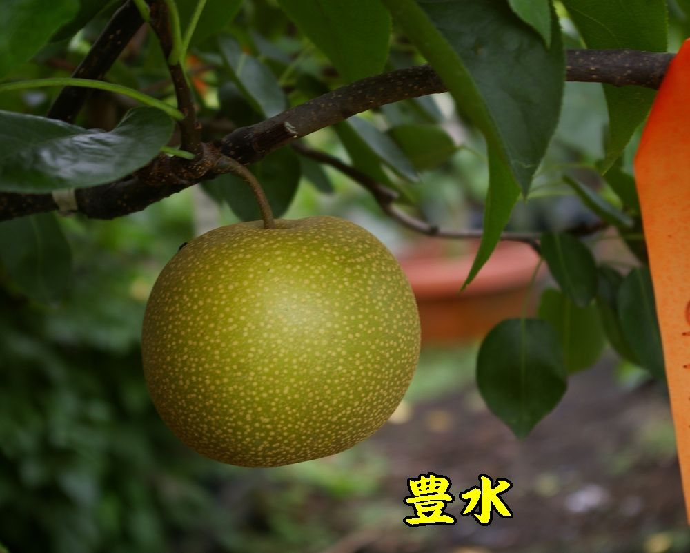 1housui0826c1.jpg