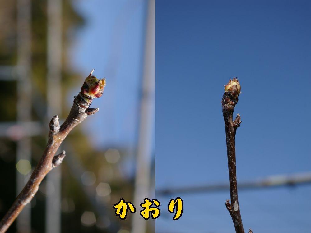 1kaori0321c1.jpg