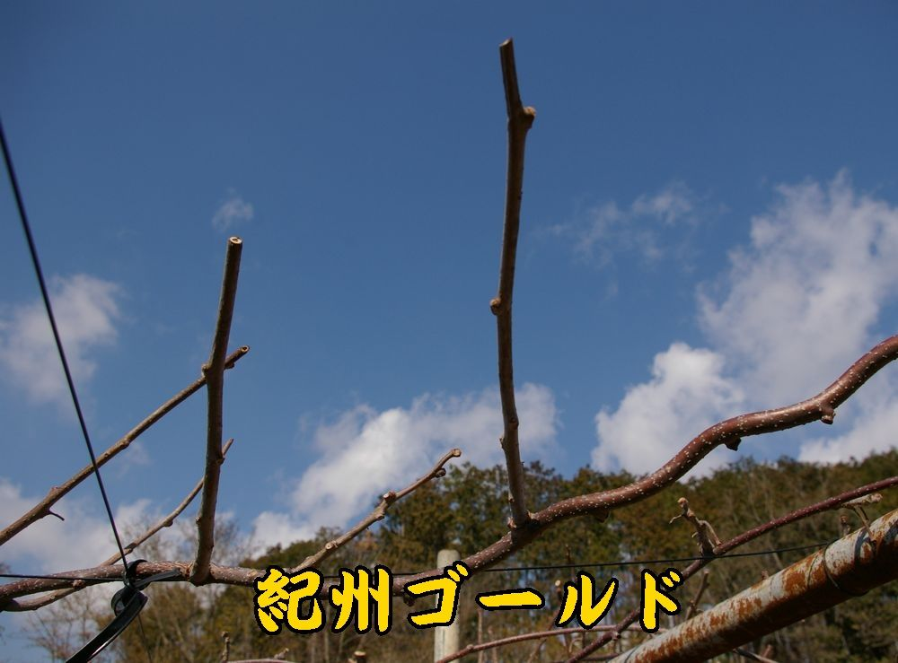1kisyu0307c1.jpg