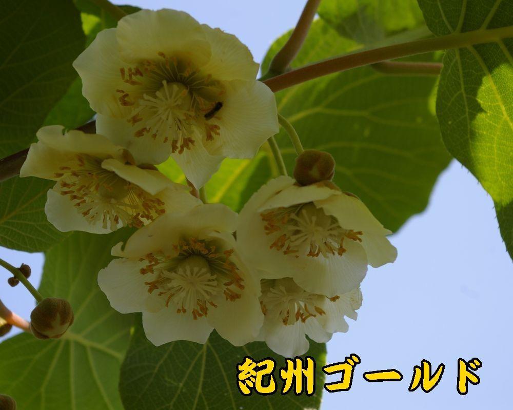 1kisyu0510c2.jpg