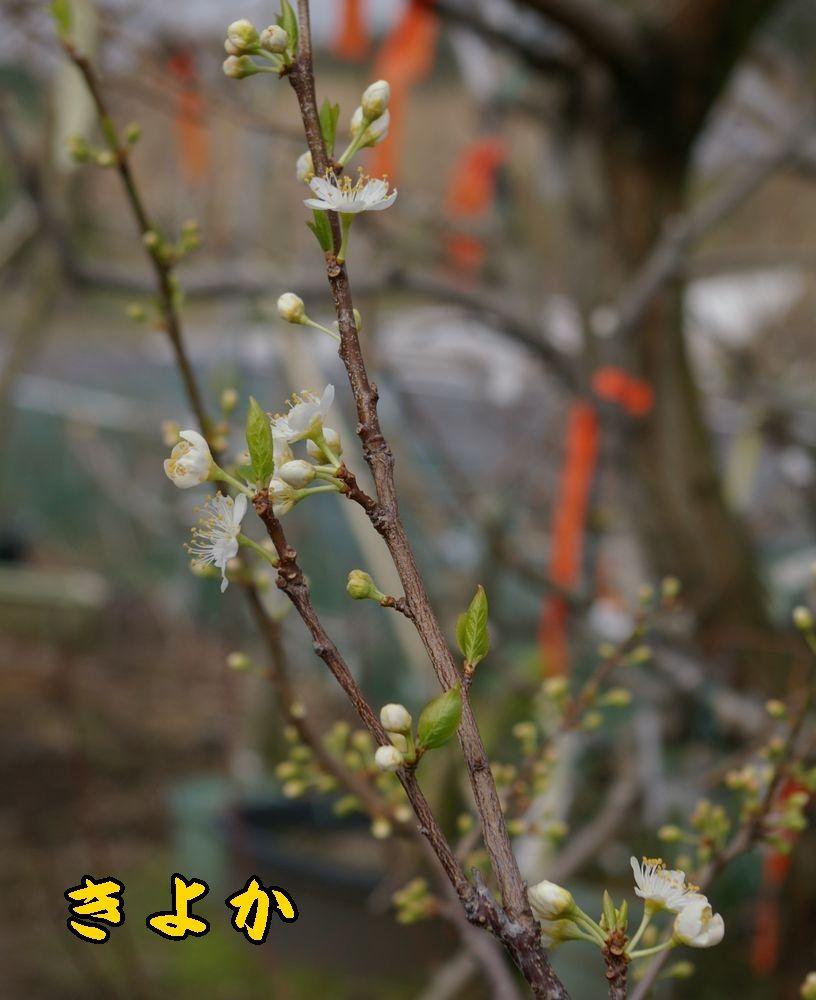 1kiyoka0319c1.jpg