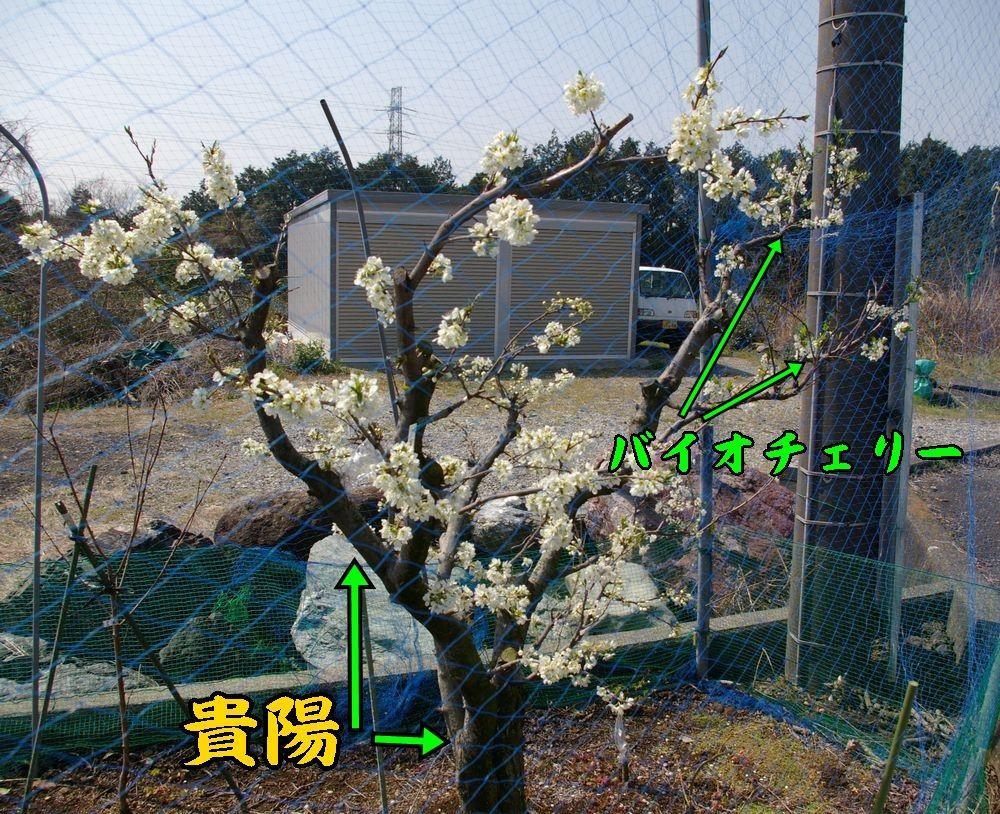 1kiyou0328c4.jpg