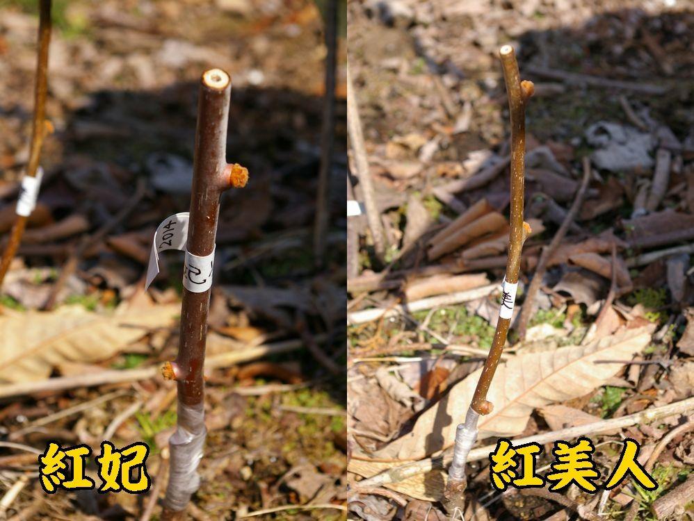 1kou_kur0307c1.jpg