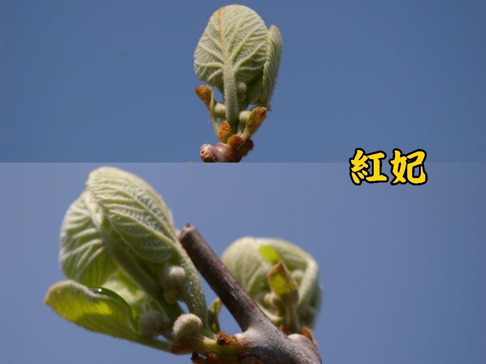 1kouhi0328c1.jpg