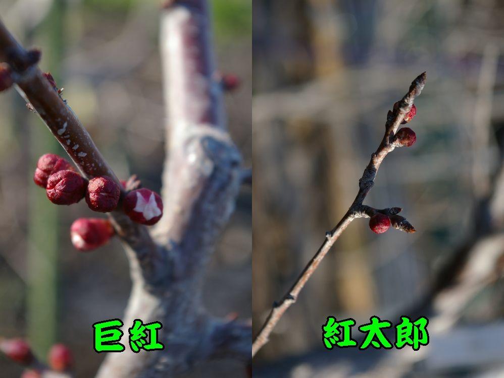1kyo_kou0306c1.jpg