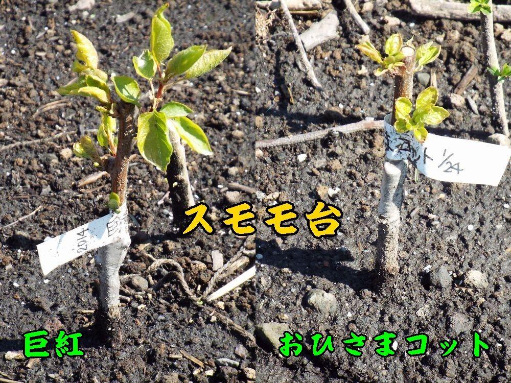 1kyokohisama0405c1.jpg