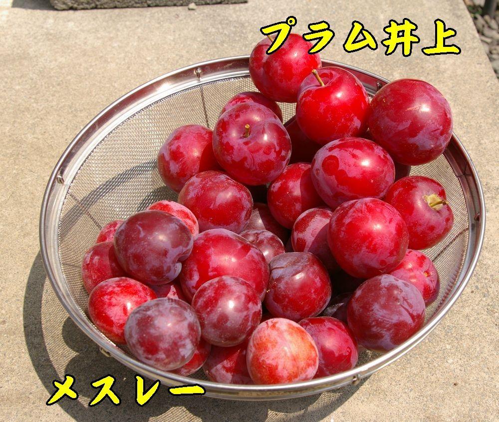 1mesu_inoue0702c1.jpg