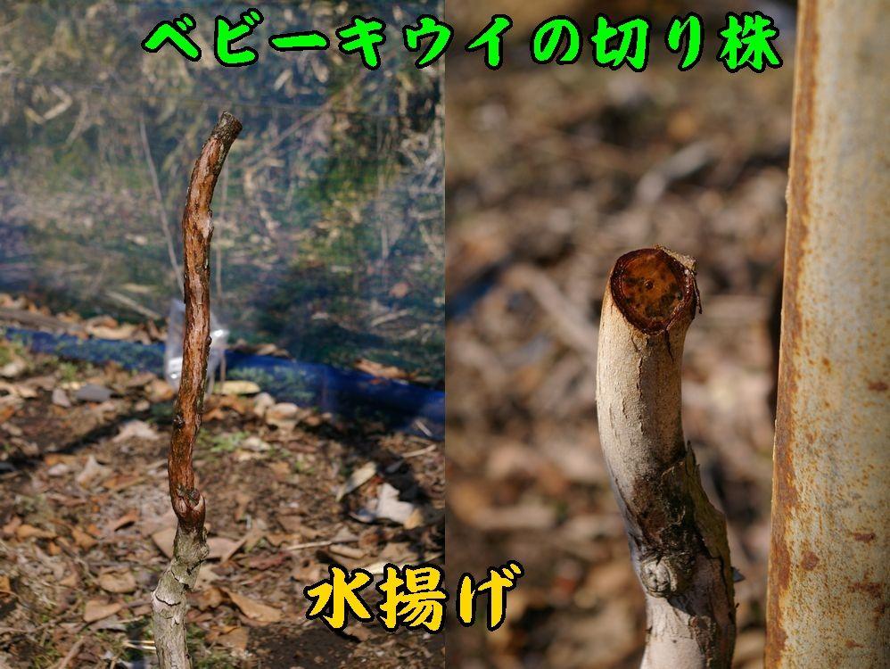 1mizuage0307c1.jpg