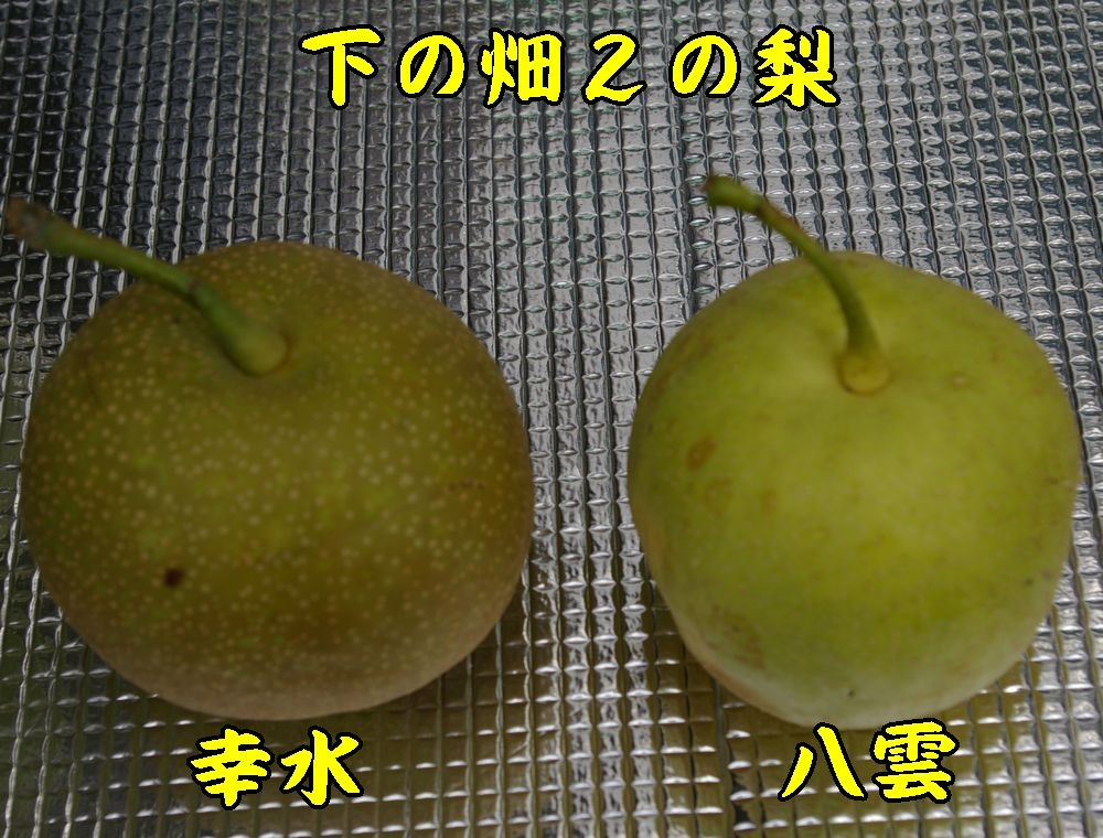 1nasi0824c1.jpg