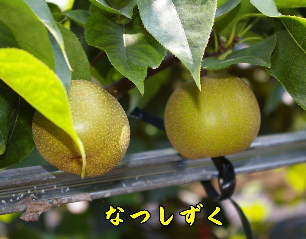 1natusizuku0731c1.jpg