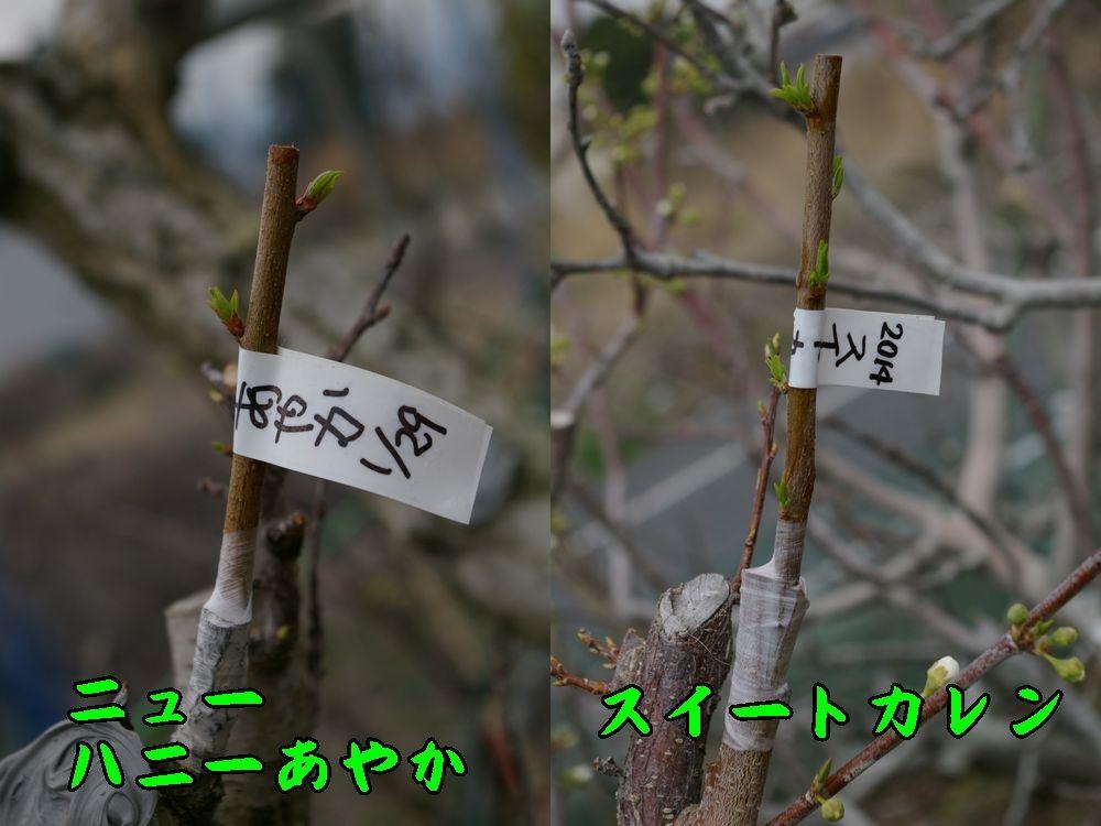 1newhan_sweet0320c1.jpg