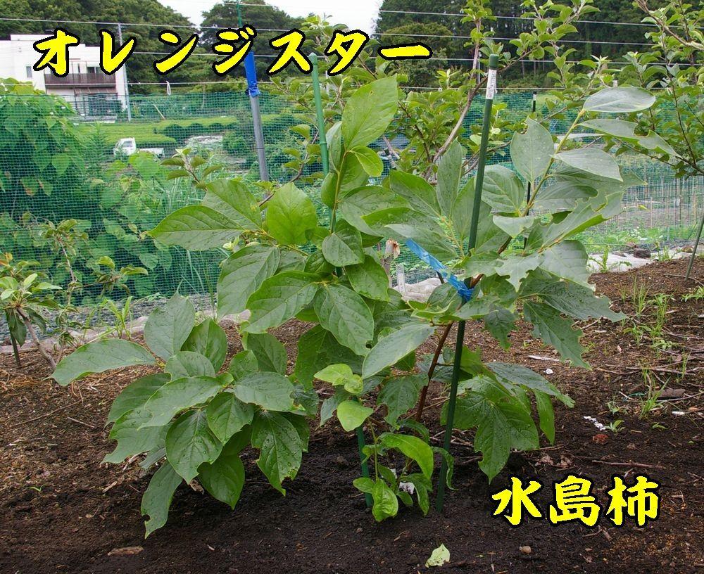 1oren_mizu0621c1.jpg