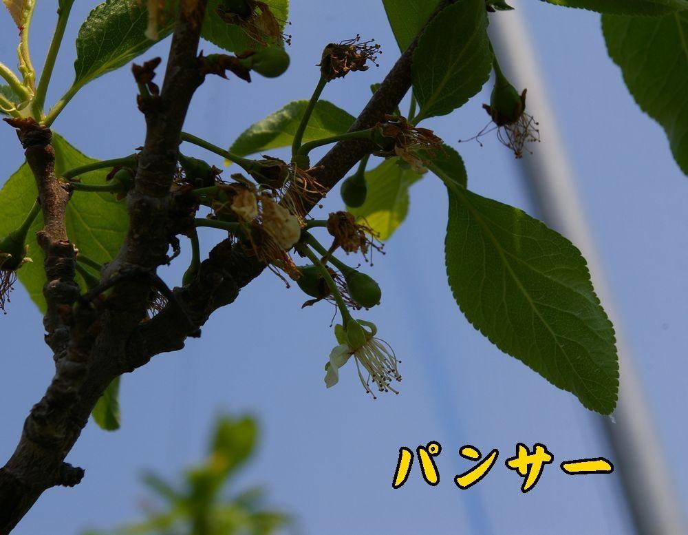 1panser0426c1.jpg