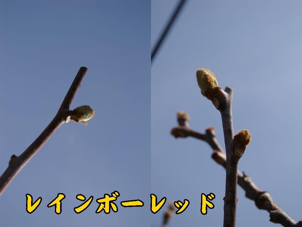 1rainbow0319c1.jpg