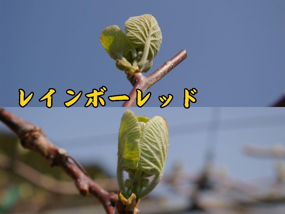 1rainbow0328c1.jpg