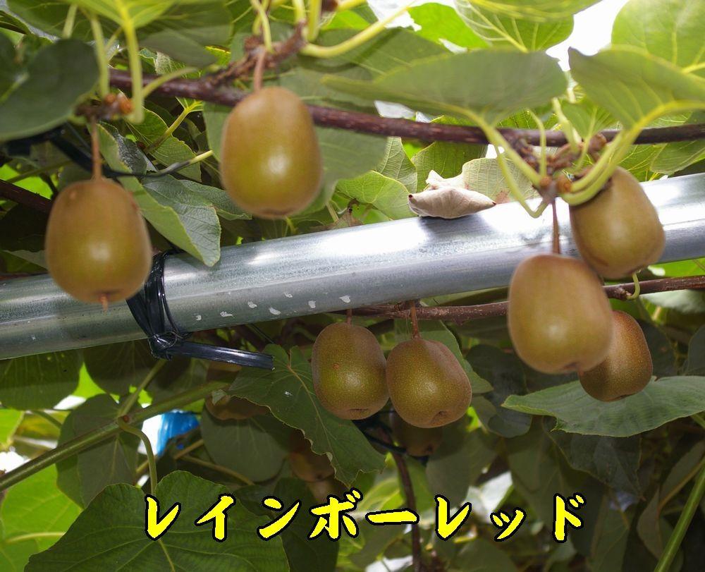 1rainbow0820c1.jpg