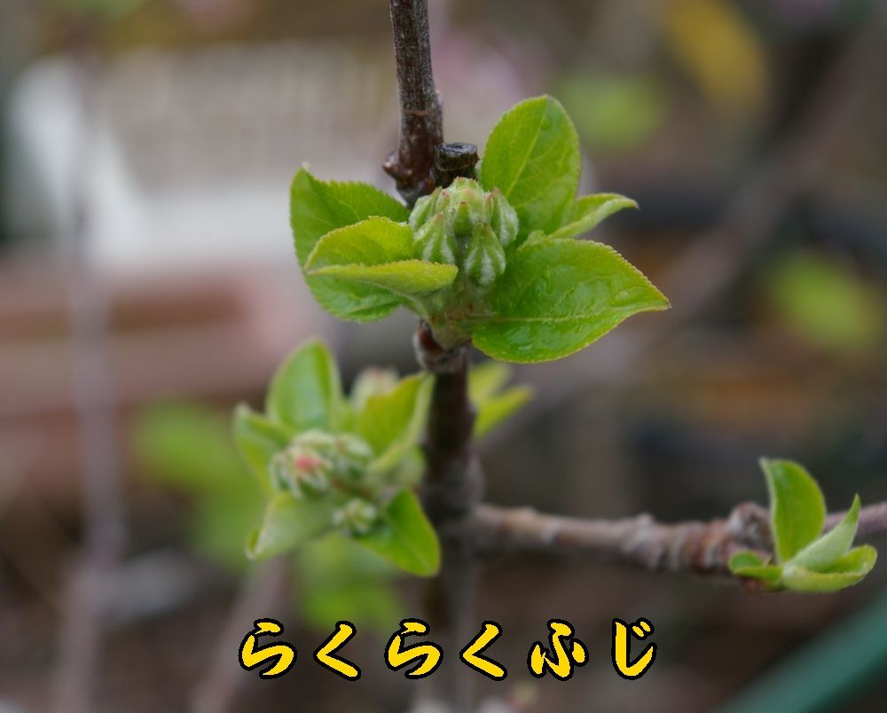 1rakufuji0403c1.jpg
