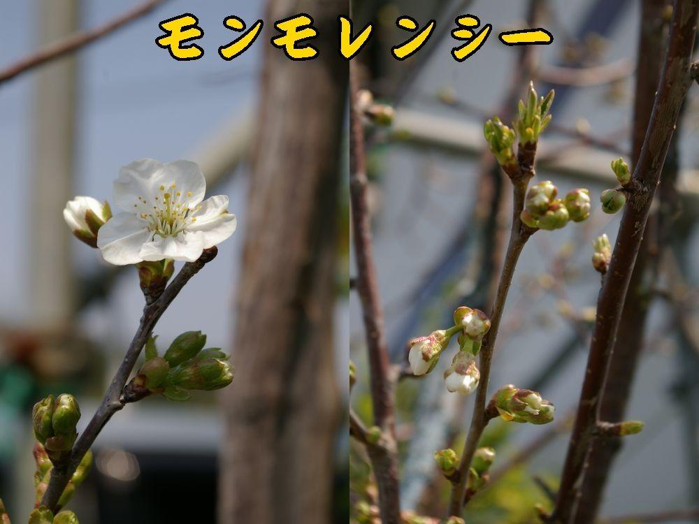 1sanka0410c1.jpg