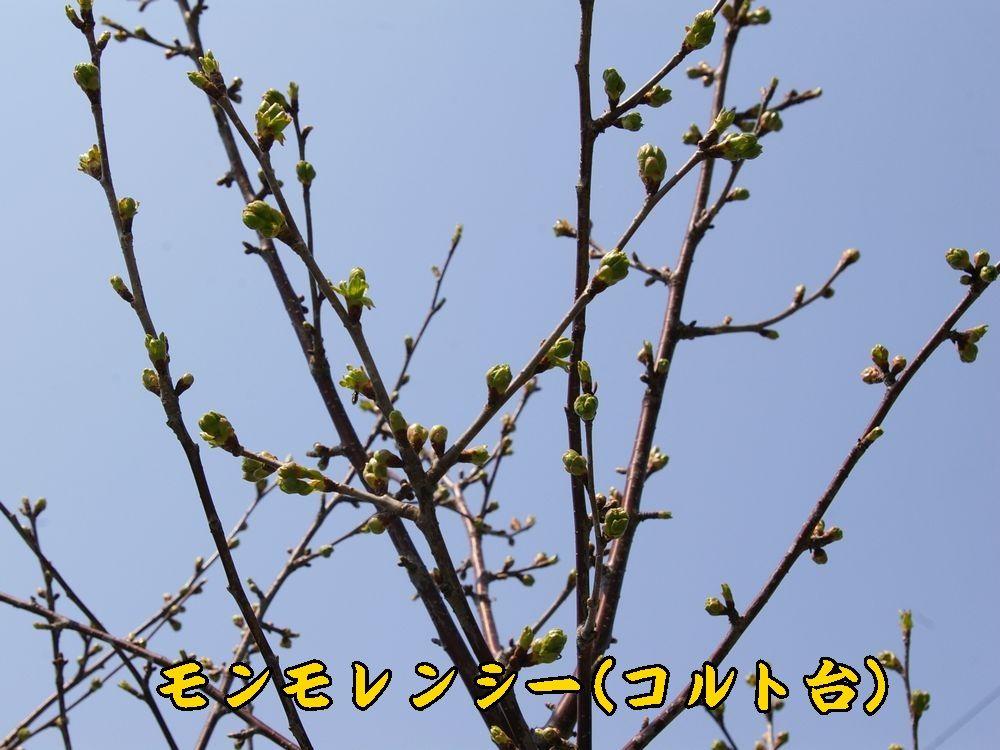 1sanka0410c2.jpg