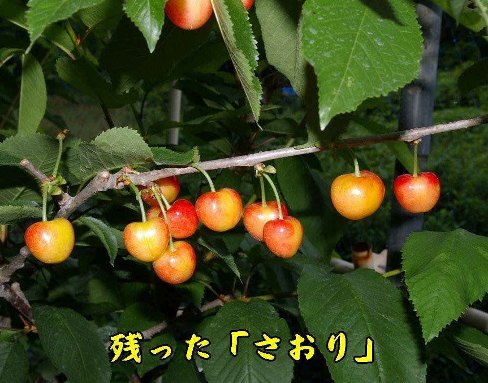 1saori0607c2.jpg
