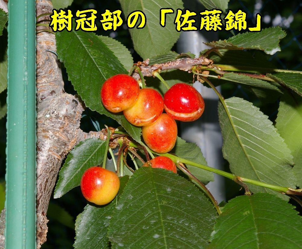 1sato0607c1.jpg