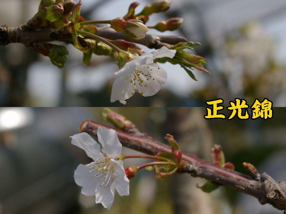 1seiko0410c1.jpg
