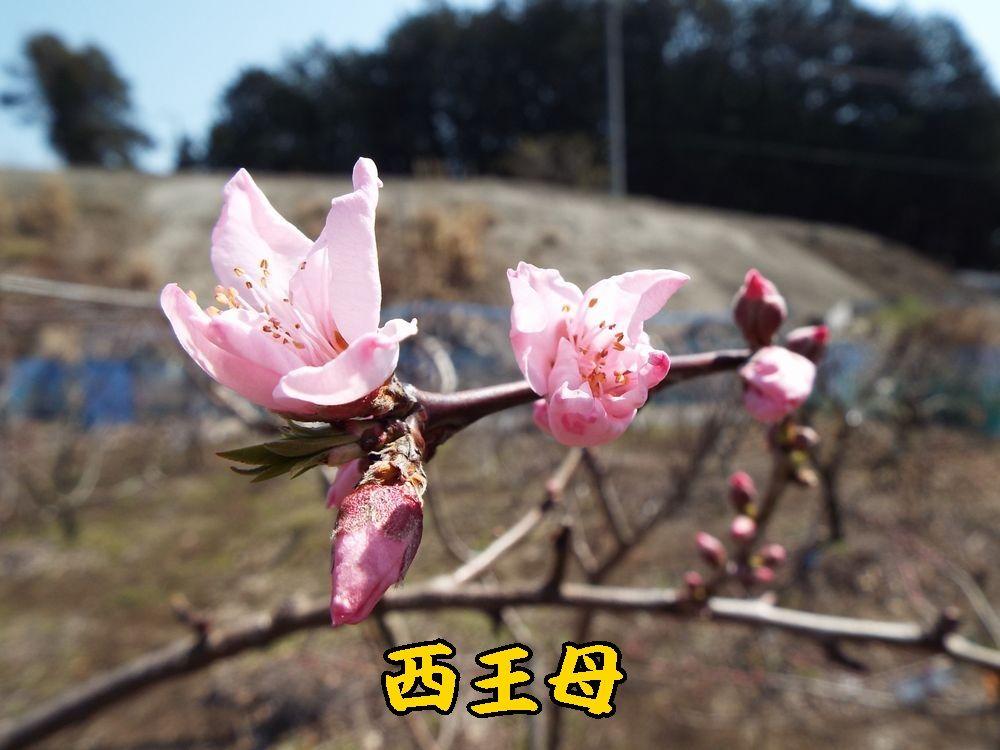1seiobo0325c1.jpg