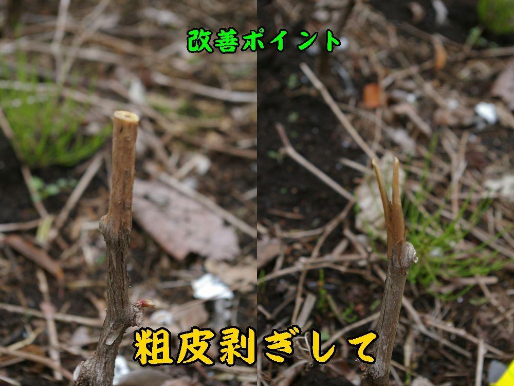 1sokawa0420c2.jpg
