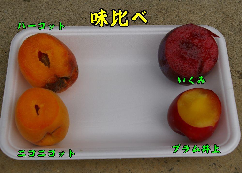 1su_an0627c2.jpg