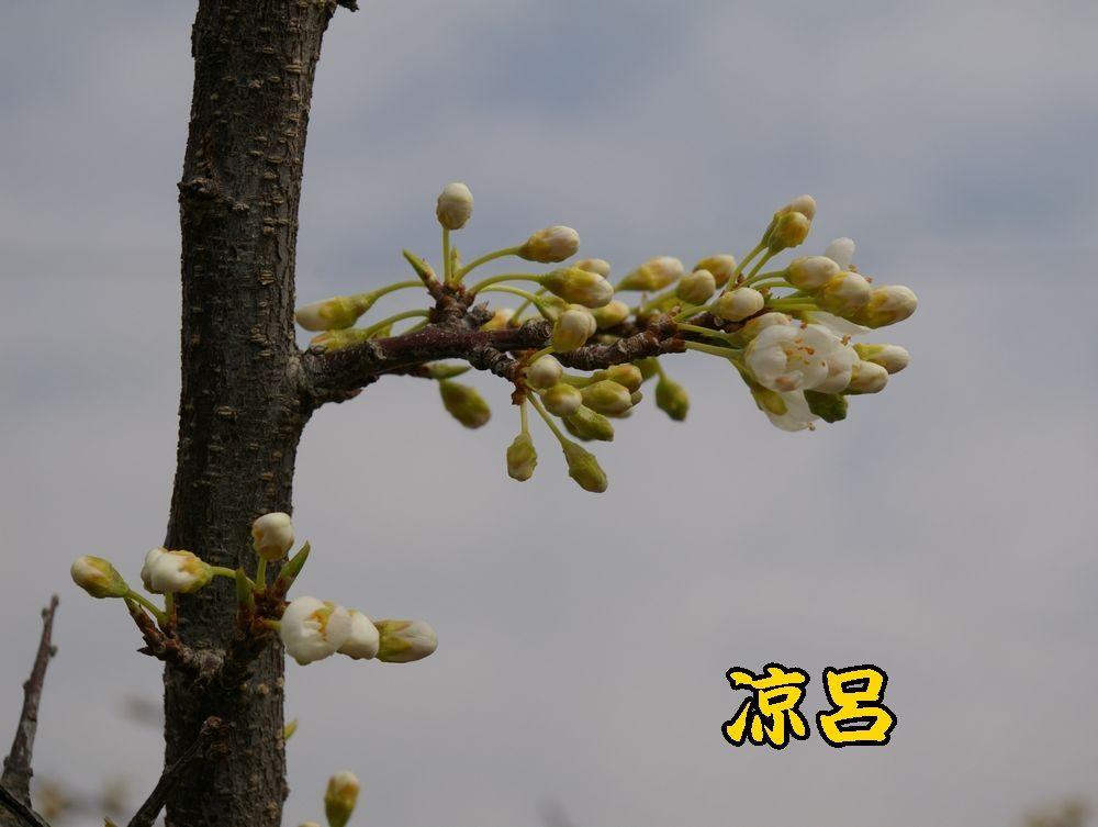 1suzuro0319c1.jpg