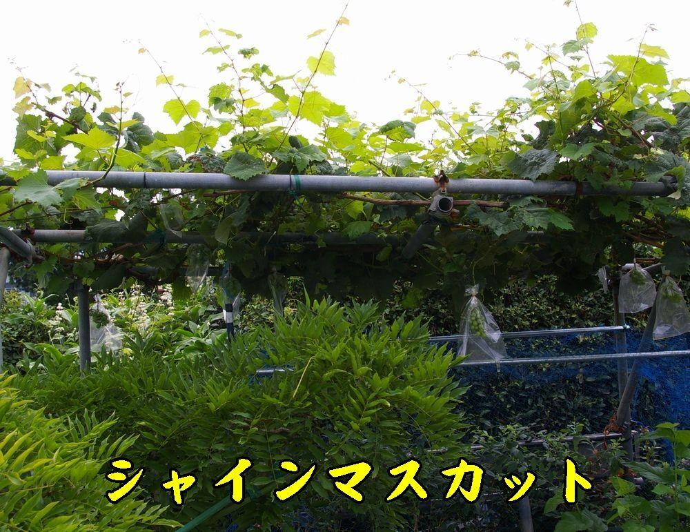 1syainM0803c1.jpg