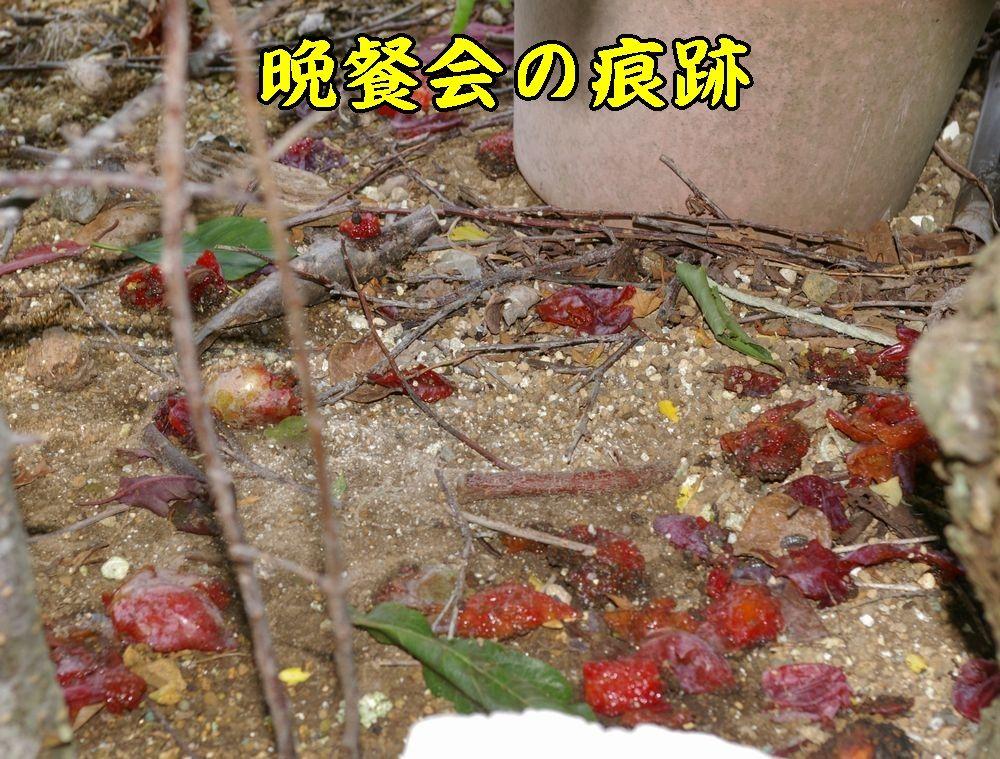 1syokugai0704c1.jpg