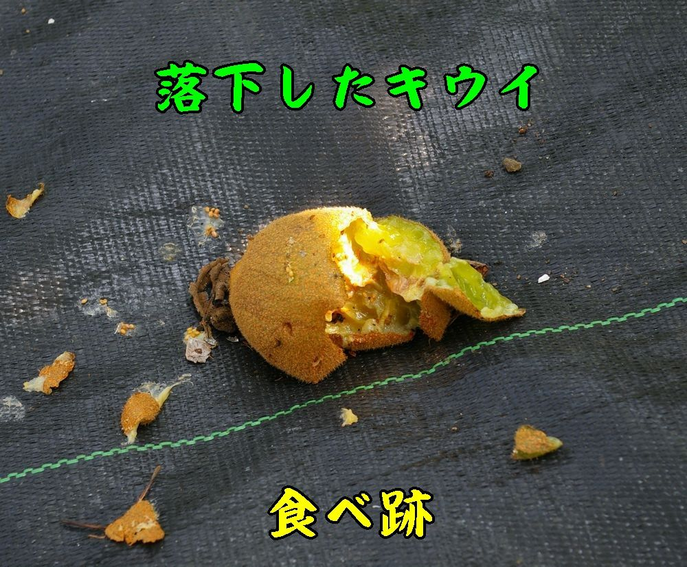 1syokugai0731c2.jpg