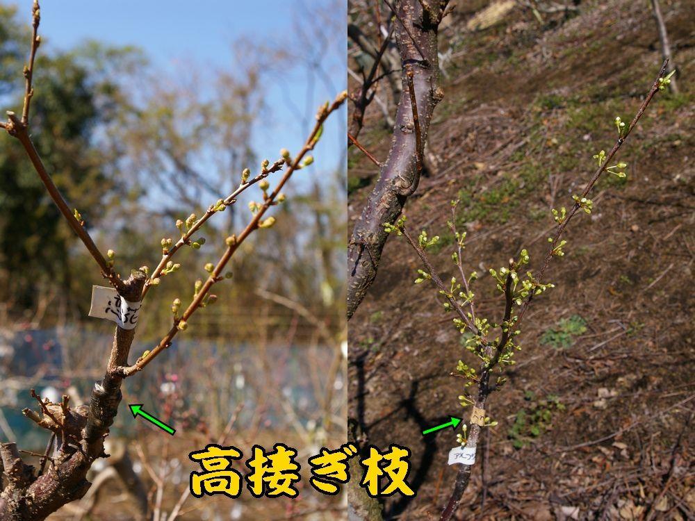 1taka_koi0323c1.jpg